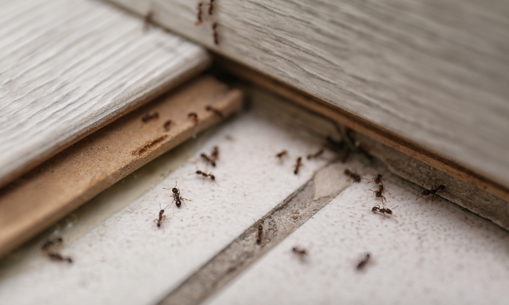 3-Ways-to-Protect-Your-Home-From-a-Bug-Infestation-This-Spring
